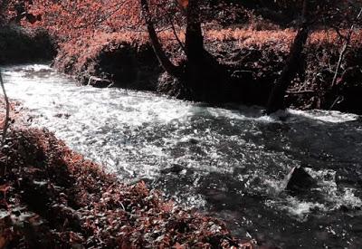 Rio Salvaxe 2